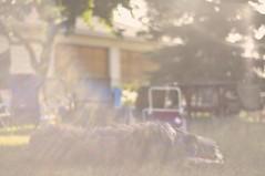 (Josh Medicoff) Tags: dog photography blurry nikon collie bokeh background smooth flare bearded beardedcollie silky sunflare blurrybackground 2011 smoothbokeh silkybokeh joshicoff