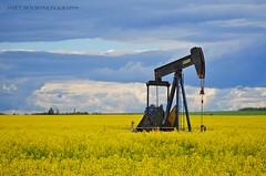 Natural Resources (Janet Ayton) Tags: summer canada yellow jack nikon pump alberta bigsky canola grandeprairie pumpjack nikkorlens canolafield ©allrightsreserved nationaloilwell cans2s d7000 nikond7000