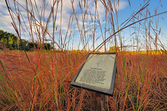 Big Bluestem DSC_3592 by Mully410 * Images