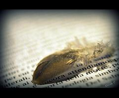 ... e ancora attendiamo alla porta della morte [...and we are still waiting at the door of death] [EXPLORE Sep 25, 2011 #170] (dClaudio [homofugit]) Tags: door macro death book nikon waiting dof feather down thesis studies selective plume d90 mygearandme mygearandmepremium