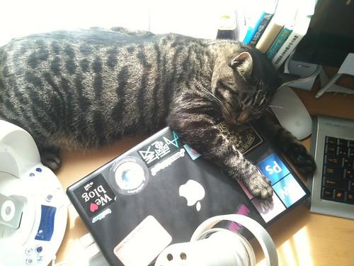 机の上で寝る猫