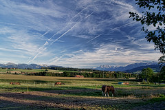 switzerland 5 (tim caynes) Tags: blue vacation sky horses panorama holiday mountains clouds landscape switzerland evening shadows view sony fields contrails idyllic chapelle wispy grazing cpl f9 18mm vapourtrails circularpolariser a500 timcaynes caynes lakegenevaregion chateaudoron chapelleglne goingtogenevaaiport justrathernice
