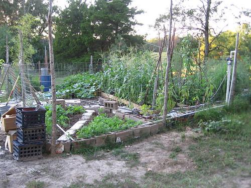 garden, sept 2011 001
