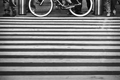 """Las cebras"" (Feref Garca) Tags: street bw bike bicycle mxico cycling df ciclismo bicicletas"