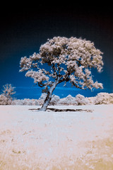Fakerir (Mr-Davies) Tags: blue red motion blur colour tree nature yellow canon ir screw 50mm fake sunny filter infrared mk2 5d f18 infra false mkii