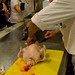 Bobby Santos Poultry Taste Education