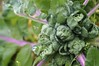 Brusell Sprouts