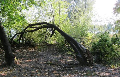 Jännittävä puu by Anna Amnell