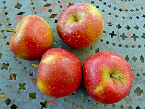 Spitzenburg apples