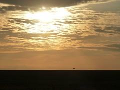 Sunrise in Masai Mara (Carlos Affonso) Tags: africa kenya safari masai maasai savanna masaimara maasaimara savana qunia