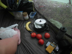 Got me some home garden tomatoes (: (Wojciechh) Tags: ocean road travel bridge camping camp sun house mountain beach home rain bicycle fog swimming fire freedom major us long desert awesome homeless cities sunny grand canyon days trail stealth miles states inspirational cheap touring