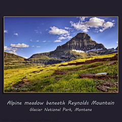 Alpine meadow beneath Reynolds Mountain (tim, TimCooperPhotos.com) Tags: flowers blue snow mountains green landscape us nationalpark montana flickr meadow northamerica glaciernp timcooper yellowg dblringexcellence tplringexcellence