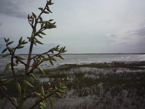 Charleston 143