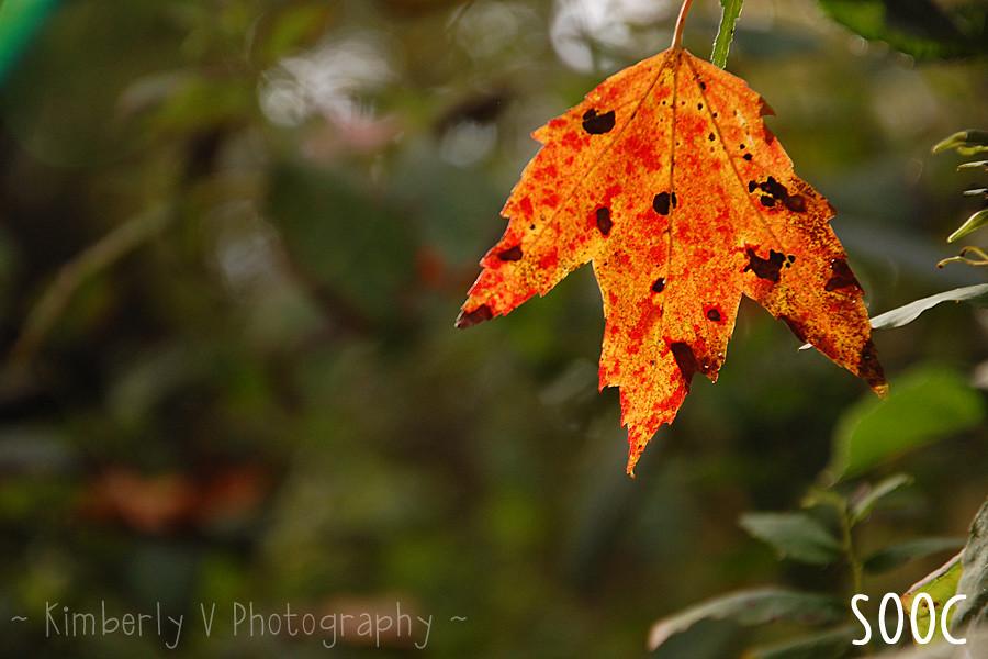 Leaves2-SOOC
