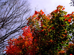 time is that which ends (dmixo6) Tags: autumn canada colour nature leaves muskoka tress dugg dmixo6