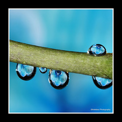 ~Blue Rain~ (Adettara Photography) Tags: blue orchid magic artistoftheyearlevel3 artistoftheyearlevel4 musictomyeyeslevel1 macroartadettararefractiondropswaterflowermycollectionsdc