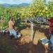Cornerstone Harvest 2010 128