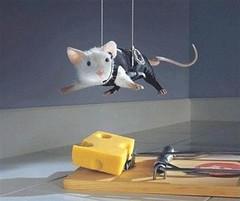 Ratón intentando conseguir un poco de su preciado queso