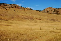 Grassy Hillside (Let Ideas Compete) Tags: autumn brown foothills color fall yellow gold golden october colorado open space boulder co essence openspace prairie grassland earthtones foothill highway36 shotsfromabikeride