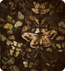 wings (hanna.bi) Tags: butterfly october prague collection 2011 hannabi