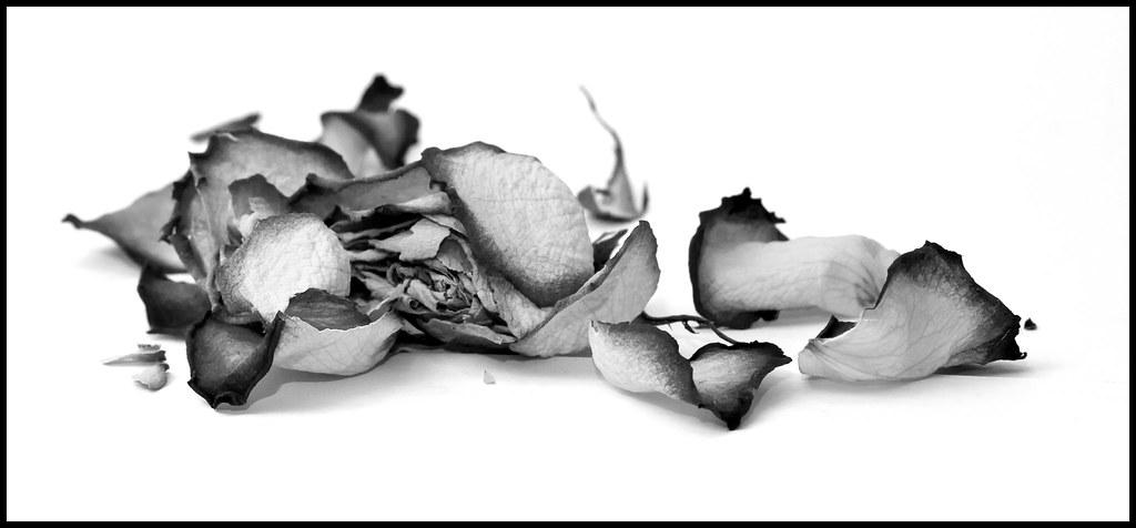 B&W Roses