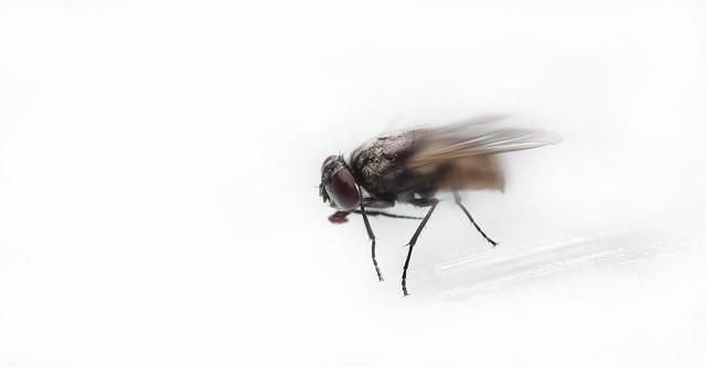 Fly IV