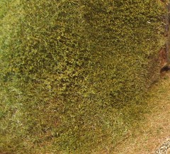 Grassnflock