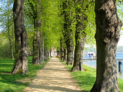 Alley with lime trees (Tilia) (Batikart ... handicapped ... sorry for no comments) Tags: shadow sun tree green nature grass sunshine canon germany way landscape geotagged deutschland licht pier alley flora europa europe pattern path patterns natur sunny gras grn sonnig landschaft sonne schatten baum muster kiel schleswigholstein weg steg allee linde g11 limetree seebrcke frde 2011 landungsbrcke sonnenlicht pries landungssteg friedrichsort kielfjord batikart canonpowershotg11 landingdock kielerfrde