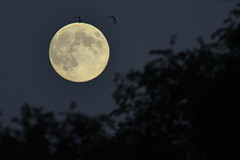 Harvest Moon DSC_1026 by Mully410 * Images