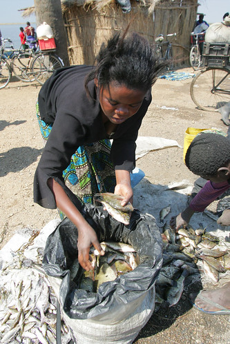 Processed fish from small-scale fisheries. Photo by Stevie Mann, 2007.