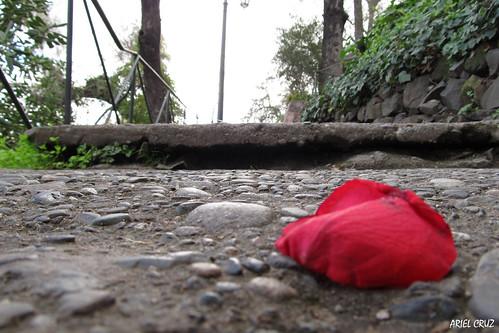 Rosita | Little Rose | Cerro Santa Lucía