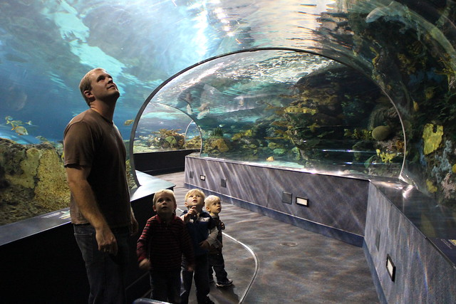 Gatlinburg Aquarium
