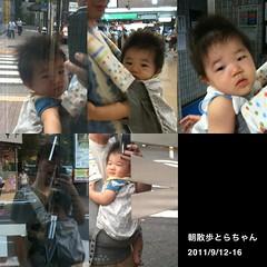 朝散歩とらちゃん まとめ (2011/9/12-16)