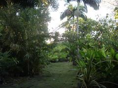 DSC02724 (rantavani) Tags: plantas tropicais
