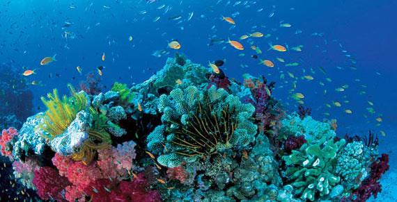 72-La-gran-barrera-de-coral-Great-Barrier-Reef