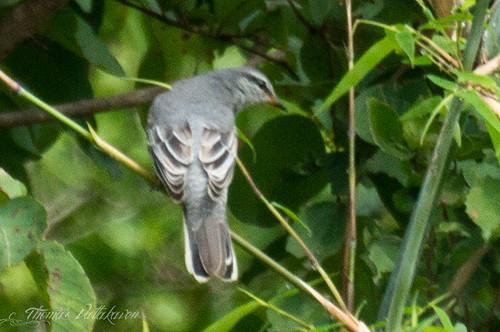 Mystery bird?