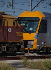 Loco 4486 and waratah A8 (Photography Perspectiv) Tags: train diesel loco auburn amf waratah cityrail aset 4486