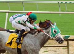 "2011-09-15 (19) r1 Joshua Navarro on #4 Ridge Amour (JLeeFleenor) Tags: racing horses jockeys thoroughbreds photo photography photos horseracing thoroughbredracing grey gray winner jockey جُوكِي ""赛马骑师"" jinete ""競馬騎手"" dżokej jocheu คนขี่ม้าแข่ง jóquei žokej kilparatsastaja rennreiter fantino ""경마 기수"" жокей jokey người equine equestrian cheval cavalo cavallo cavall caballo pferd paard perd hevonen hest hestur cal kon konj beygir capall ceffyl cuddy yarraman faras alogo soos kuda uma pfeerd koin حصان кон 马 häst άλογο סוס घोड़ा 馬 koń лошадь joshuanavarro maryland"