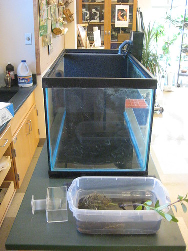 brackish aquarium re-do