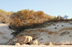 Glacial Erratics and Glacial Outwash (sandy richard) Tags: geology wildwood wildwoodstatepark newyorkstateparks longislandbeaches sandyrichard longislandgeology sandrarichard wildwoodstateparkgeology