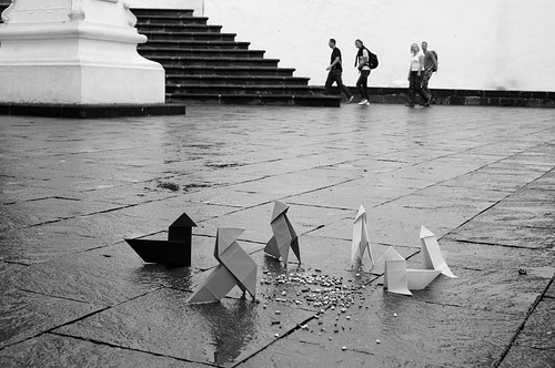 I Maratón Fotográfica Afoto-La Palma 2º Premio