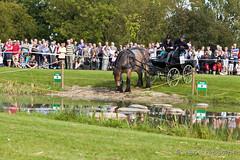 PHC Power Horse Presikhaaf (Ingrid Fotografie) Tags: arnhem nederland paarden presikhaaf phc natuurcentrum trekpaard ingridfotografie stadsboerderijpresikhaaf natuurcentrumarnhem powerhorsepresikhaaf