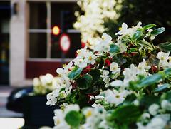 Ponto vermelho (andrajos) Tags: flowers light red españa white flores branco spain espanha traffic vermelho semáforo ourense orense