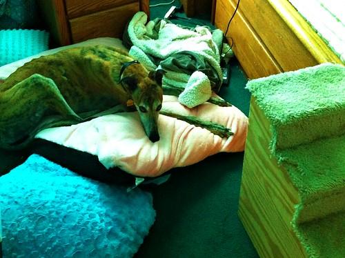 ventura's bed