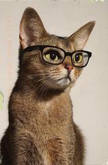postcard - from Sassefrass, Netherlands (Jassy-50) Tags: cat glasses postcard postcrossing damaged
