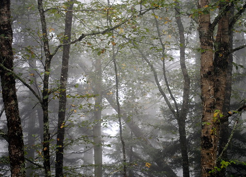 Smoky Mountains Trees