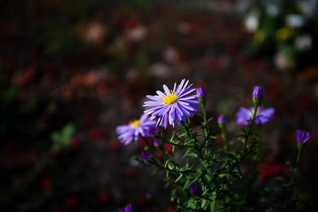 IMAGE: http://farm7.static.flickr.com/6157/6189147855_fcacfc84b5_z.jpg