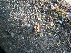 Köcherfliegenlarve, NGID873487177 (naturgucker.de) Tags: sterreich niedersterreich naturguckerde sixmhlebeiwaidhofenanderthaya cdorfschulekleineberhartsgruppehurricane ngid873487177
