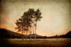 Mazama Aspens at Dawn (EdBob) Tags: ranch light texture clouds rural sunrise dawn countryside washington farm winthrop country pasture valley cascades pacificnorthwest aspen washingtonstate methow mazama aspentrees 2011 highway20 methowvalley northcascadeshighway sweetlight colorphotoaward edmundlowe edlowe edmundlowe allmyphotographsarecopyrightedandallrightsreservednoneofthesephotosmaybereproducedandorusedinanyformofpublicationprintortheinternetwithoutmywrittenpermission edmundlowephotography edmundlowestudiosinc
