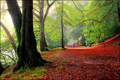 Birnam Beech (angus clyne) Tags: park camera new wood old uk travel autumn light red sky mist holiday man black colour tree green art fall yellow fog forest photoshop canon river garden dark bench landscape 50mm gold dawn scotland leaf day ray branch time angus path walk seat magic north perthshire picture scottish shakespeare front east beam tay explore filter lee page trunk hdr beech bloke birnam clyne idream colorphotoaward canon5dmarkii